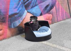 Dog Bed, Dog Furniture, Oil Drum Dog Bed, Industrial Chic, Repurposed, Upcycle Dog Bed, Pet Bed, Puppy Bed, Industrial, Pet Furniture, Dog by CleverRavenDogCo on Etsy