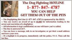 April 8th, is always National Dog Fighting Awareness Day! Please keep an eye out and report any activity you are aware of. Here is the number to get help.
