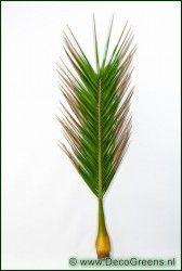 Kunst Giant cocosnoot 72 bladeren 249cm (per ste van 6 stuks)