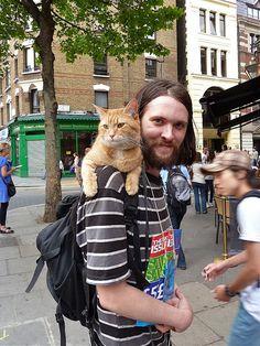 Bowen & Bob the Cat! James Bowen & Bob the Cat! Crazy Cat Lady, Crazy Cats, Cute Cats, Funny Cats, Street Cat Bob, Son Chat, Orange Cats, All About Cats, Cat People