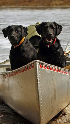 Dogs canoeing