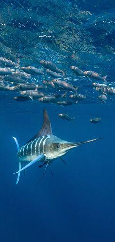 Flora Marina, Wildlife Wallpaper, Hd Wallpaper, Aquarium, Beautiful Fish, Ocean Creatures, Sea And Ocean, Underwater World, Big Fish