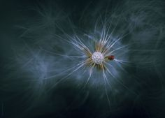 Small  in  Nature by Eleonora Di Primo, via 500px
