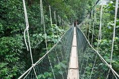 Taman Negara Canopy Walk- t stretches over half a kilometre across big trees and reaches up to 45 metres in altitude. Besides climbing stairs from tree to tree, one can also be amazed by more than 10.000 different plants and around 600 different animal species.