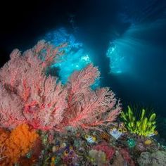"""Pristine Seas"" Photo Assignment -- National Geographic Your Shot"