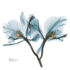 Orchids in Blue Kunstdruck