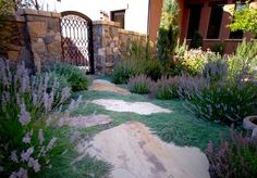 Xeriscape Groundcover Oregon Landscaping Blooming Desert Landscapes Powell Butte, OR