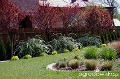 Ogród Anety - strona 17 - Forum ogrodnicze - Ogrodowisko