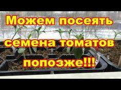 Семена томатов можем посеять попозже,используя этот метод - YouTube