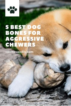 Edible dog bones are the best things you can give to your dog that he can chew on for a while but digest easily. Read here to learn 5 best dog bones for aggressive chewers. Dog Breeds Little, Top Dog Breeds, Best Dog Breeds, Best Dogs, Dog Chew Bones, Dog Boarding Near Me, Make Dog Food, Dog Nutrition, Nutrition Guide