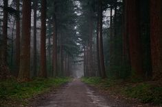 Morning stroll at the Speulderbos in The Netherlands