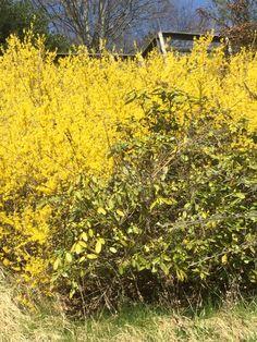 Pioggia di luce dorata. Plants, Plant, Planets