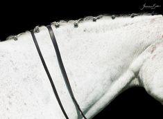 Hablando con: Yasmina Bello | My Horseback View Pageants, Beautiful Moments, Group Photos, Photography Courses