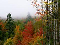 Georgeous Maine fall foliage!