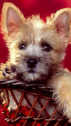 Puppy dog                                                                                                                                                                                 More