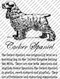 COCKER SPANIEL DOWNLOAD Instant Digital Vintage Art with Description Printable Frame Cards Fabric Transfer Iron On by RosiesVintageArtShop on Etsy