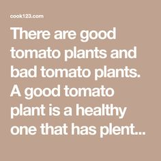 There are good tomato plants and bad tomato plants. A good tomato plant is a healthy one that has plenty of green foliage and possibly some emerging Plant Cages, Tomato Recipe, Preventive Maintenance, Dry Leaf, Tomato Plants, I Am Bad, Cool Plants, Garden Tips, Lawn