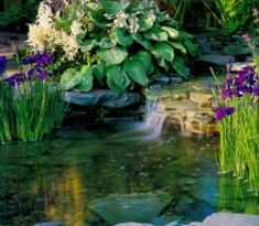 Some irises grow well in ponds.