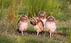 Hilarious pictures from Comedy Wildlife Photography Awards shows lighter side of natural world Comedy Wildlife Photography, Photography Awards, Animals And Pets, Funny Animals, Cute Animals, Funny Cats, Crazy Animals, Funny Animal Photos, Funny Pictures