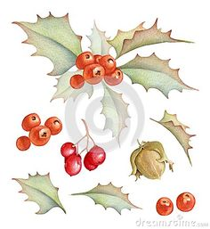 Holly bush, hazelnut, red berries and leaves. Hand drawn watercolors