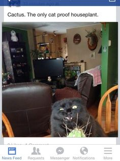 Cat Proof Houseplant Cat | 31 Cats You Won't Believe Actually Exist