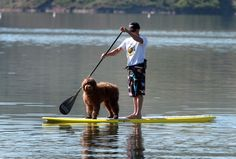 Even in landlocked Utah, stand-up paddle boarding is riding a wave of popularity. (Rick Egan  | The Salt Lake Tribune)