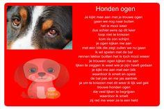 Honden ogen