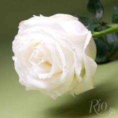 Rio Roses: Proud