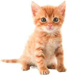 Fun Feline Fact: Female orange cats are rare. The males outnumber them 80% to 20%. So if you have a female orange cat you now have license to brag/talk about her even more! (Like you weren't already!)