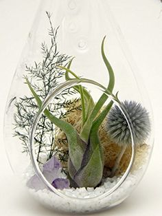 Small Air Plant Terrarium Kit with Purple Amethyst Crystal / Shabby Country Chic / Teardrop Glass Kit Only Candelaria Z