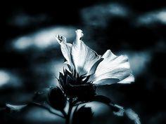 'The Rose of Sharon' Allen Beilschmidt, Sr.