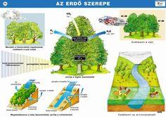 az erdő szerepe Nature Study, Montessori, Environment, Parenting, Classroom, Science, Teaching, Photo And Video, School