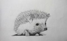 Скетч олівцем. Їжак. Pencil sketch. Hedgehog.