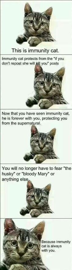 "Now I am safe and if someone sends something to me I will say ""I have the immunity cat!"""