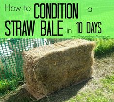 How to Condition Straw Bales By Shelle March 13 2015 Gardening Use this method to get a bale ready for planting Hay Bale Gardening, Strawbale Gardening, Container Gardening, Container Houses, Straw Bales, Hay Bales, Organic Vegetables, Growing Vegetables, Gardening Vegetables