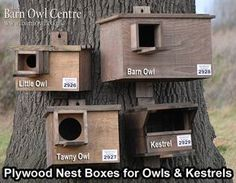 This site is from England. In Michigan we have the screech owl, which requires a 3 inch hole. Box should be 10 to 30 feet off ground. Box must be water tight. Owl Nest Box, Owl Box, Bird House Feeder, Bird Feeders, Potager Bio, Bird House Plans, Bird Boxes, Nesting Boxes, Backyard Birds