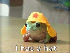 froggy in a hat