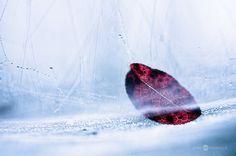 Blueberry Leaf by Nitrok on DeviantArt