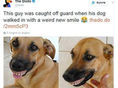 C'est en allant se promener dans le jardin de la maison familiale qu'un chien a découvert un dentier. Il n'a pas tardé à montrer son précieux...