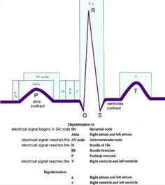 ECG complex and its connection with physiology. Nursing School Tips, Nursing Tips, Nursing Notes, Nursing Schools, Ob Nursing, Funny Nursing, Medical School, Cardiac Nursing, Pharmacology Nursing