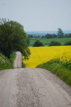 Skåne /Sweden Straight out of a Wallander scene! Country Life, Country Roads, Country Living, Places Around The World, Around The Worlds, Sweden Travel, Back Road, Farm Life, Beautiful Places