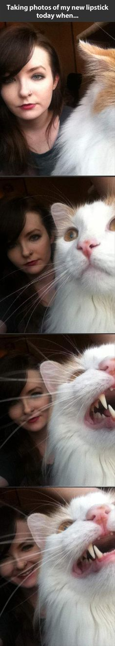 looks like my Geoff (the cat)