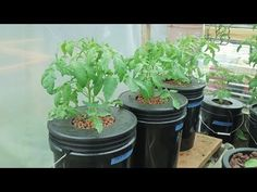 ▶ Building New Boxes for Hydroponic Growing - YouTube