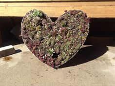 Started out as a wine barrel ring, bent it into a heart, added the back, mesh screen, cactus mix, succulents and Voila!  After a couple of rooting it will be good to hang on the wall.