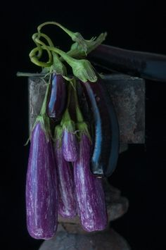 Tender Eggplants from her Pedestal series by Lynn Karlin ©. All rights reserved