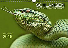 SCHLANGEN. JÄGER MIT GESPALTENER ZUNGE (Wandkalender 2016 DIN A4 quer)