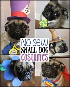 Unique small dog Halloween costume ideas made from craft foam! Superman dog costume, a Mad Hatter dog costume, Gandalf dog costume & more! Pug Halloween Costumes, Pugs In Costume, Halloween Costume Patterns, Diy Dog Costumes, Costume Ideas, Animal Costumes, Halloween Town, Halloween Ideas, Small Dog Costumes