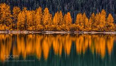 tree reflection fall BC canada by markbowenfineart #nature #mothernature #travel #traveling #vacation #visiting #trip #holiday #tourism #tourist #photooftheday #amazing #picoftheday
