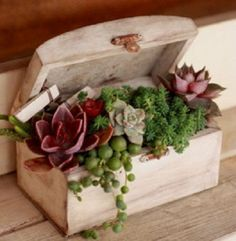 wooden box with succulent plants. I have to do this, I am so good at growing and propagating succulentslittle wooden box with succulent plants. I have to do this, I am so good at growing and propagating succulents Propagating Succulents, Succulent Gardening, Cacti And Succulents, Planting Succulents, Container Gardening, Planting Flowers, Succulent Care, Succulent Terrarium, Air Plants