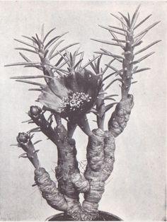 weird plant flower